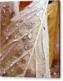 Autumn Rain Acrylic Print by Alpha Pup