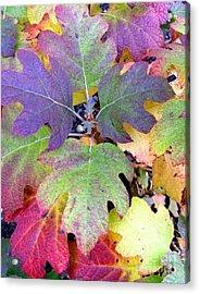 Autumn Rainbows Acrylic Print by Mindy Newman