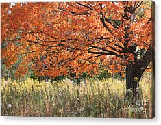 Autumn Red   Acrylic Print by Paula Guttilla
