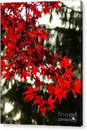 Autumn Red Acrylic Print by Jeff Breiman