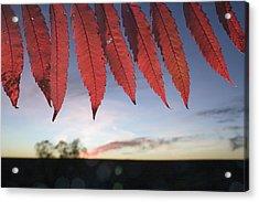 Autumn Red Sumac Leaves Acrylic Print by Jim Richardson