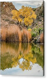 Autumn Reflection At Boyce Thompson Arboretum Acrylic Print