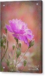 Autumn Rose Acrylic Print by Elaine Teague