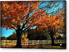 Acrylic Print featuring the photograph Autumn Rows by Joan  Minchak