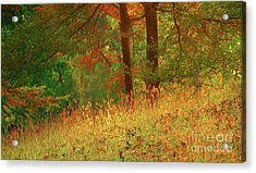 Autumn Scene In The Forest Acrylic Print by Yali Shi
