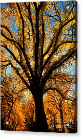Autumn Season 4 Acrylic Print