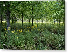 Acrylic Print featuring the photograph Autumn Serenity by Lon Dittrick