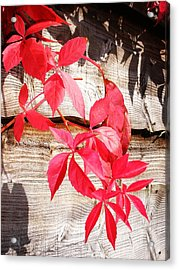 Autumn Shadows Acrylic Print by Lucia Del