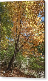 Acrylic Print featuring the photograph Autumn Show On The River by Lon Dittrick