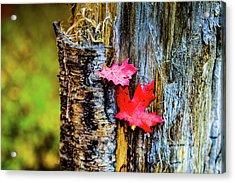 Autumn Silence Acrylic Print