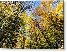 Acrylic Print featuring the photograph Autumn Skies by Anthony Baatz