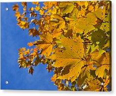 Autumn Sky Acrylic Print by JAMART Photography