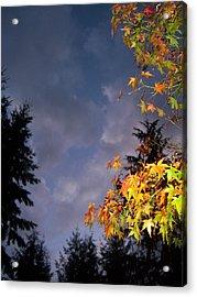 Autumn Sky Acrylic Print by Ken Day