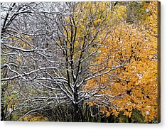 Acrylic Print featuring the photograph Autumn Snow by Doris Potter