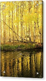 Autumn Soft Light In Stream Acrylic Print