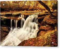 Autumn Solitude Acrylic Print by L O C