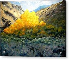 Autumn-southhills Acrylic Print