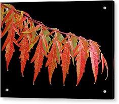Autumn Splash Acrylic Print by Gill Billington