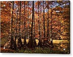 Acrylic Print featuring the photograph Autumn Splendor At Lake Murray by Tamyra Ayles