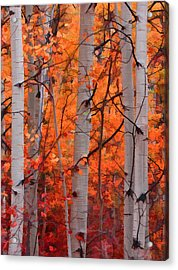 Acrylic Print featuring the photograph Autumn Splendor by Don Schwartz