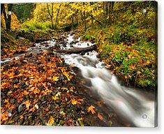 Autumn Split Acrylic Print by Mike  Dawson