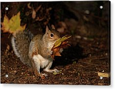 Autumn Squirrel Acrylic Print by Matt Malloy