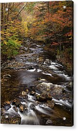 Autumn Stream Acrylic Print by Andrew Soundarajan