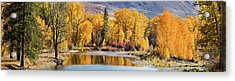 Autumn Stream Acrylic Print by Mary Jo Allen