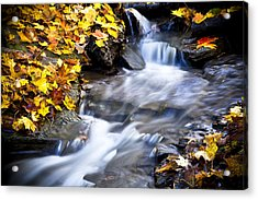 Autumn Stream No 2 Acrylic Print by Kamil Swiatek