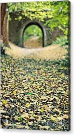 Autumn Stroll Acrylic Print by Meirion Matthias
