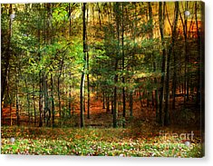 Autumn Sunset - In The Woods Acrylic Print by Judy Palkimas