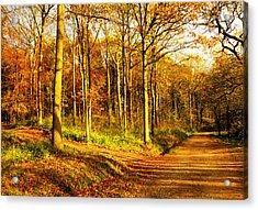 Autumn Acrylic Print by Svetlana Sewell