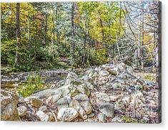 Autumn Trail Acrylic Print by A New Focus Photography