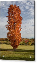 Autumn Tree Acrylic Print by Brent L Ander