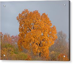 Acrylic Print featuring the photograph Autumn Tree by Donald C Morgan