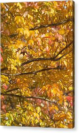 Autumn Tree Leaves Acrylic Print by David Letts