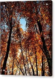 Autumn Tree Acrylic Print by Niki Mastromonaco
