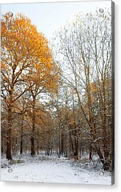Autumn Tree Acrylic Print by Svetlana Sewell