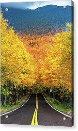 Autumn Tree Tunnel Acrylic Print