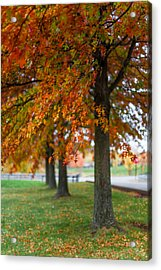 Autumn Trees In A Row Acrylic Print by April Reppucci