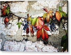 Autumn Vines Acrylic Print