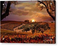 Autumn Vineyard Acrylic Print by Stephanie Laird