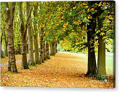 Autumn Walk Acrylic Print