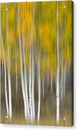 Acrylic Print featuring the photograph Autumn Was A Blur by Patricia Davidson