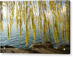 Autumn Willow Acrylic Print by Colleen Williams
