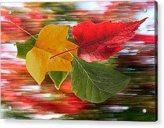 Autumn Wind Acrylic Print by Barbara  White