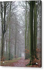 Autumn Woodland Avenue Acrylic Print