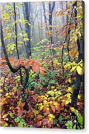 Autumn Woodland Acrylic Print by Thomas R Fletcher