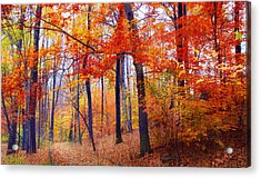 Autumn Woodland Trail Acrylic Print
