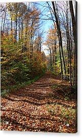 Autumn Woods Road Acrylic Print